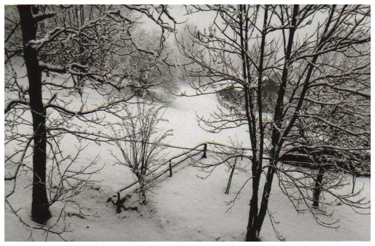 Scopa Landscape 5