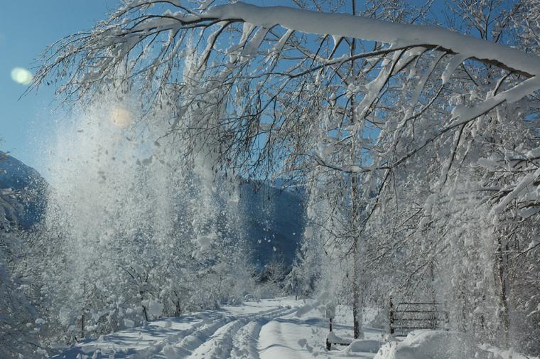Winter Wonderland 1