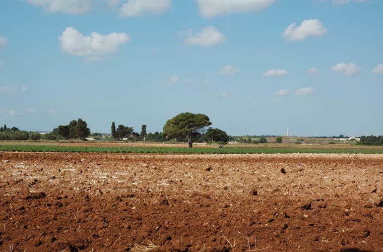 Puglia Landscape 1
