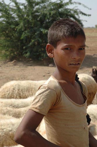 Young Shepherd in Rajasthan